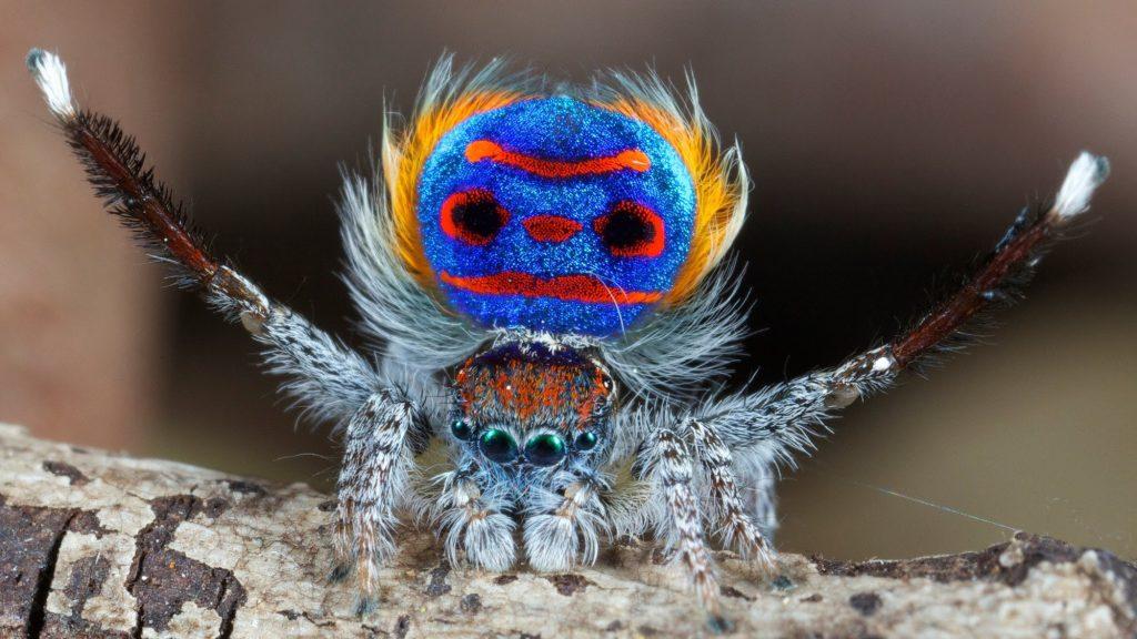 Örümcekler manyetik alan ile ilgili görsel sonucu